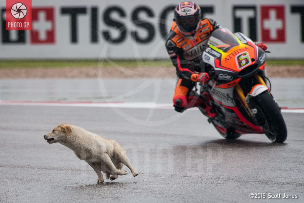 Dog Sneaks into CotA Without Credential - Photo.GP: https://photo.gp/2015/04/10/dog-sneaks-into-cota-without-credential/