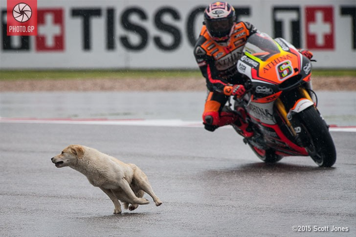 Dog Sneaks into CotA Without Credential - Photo.GP